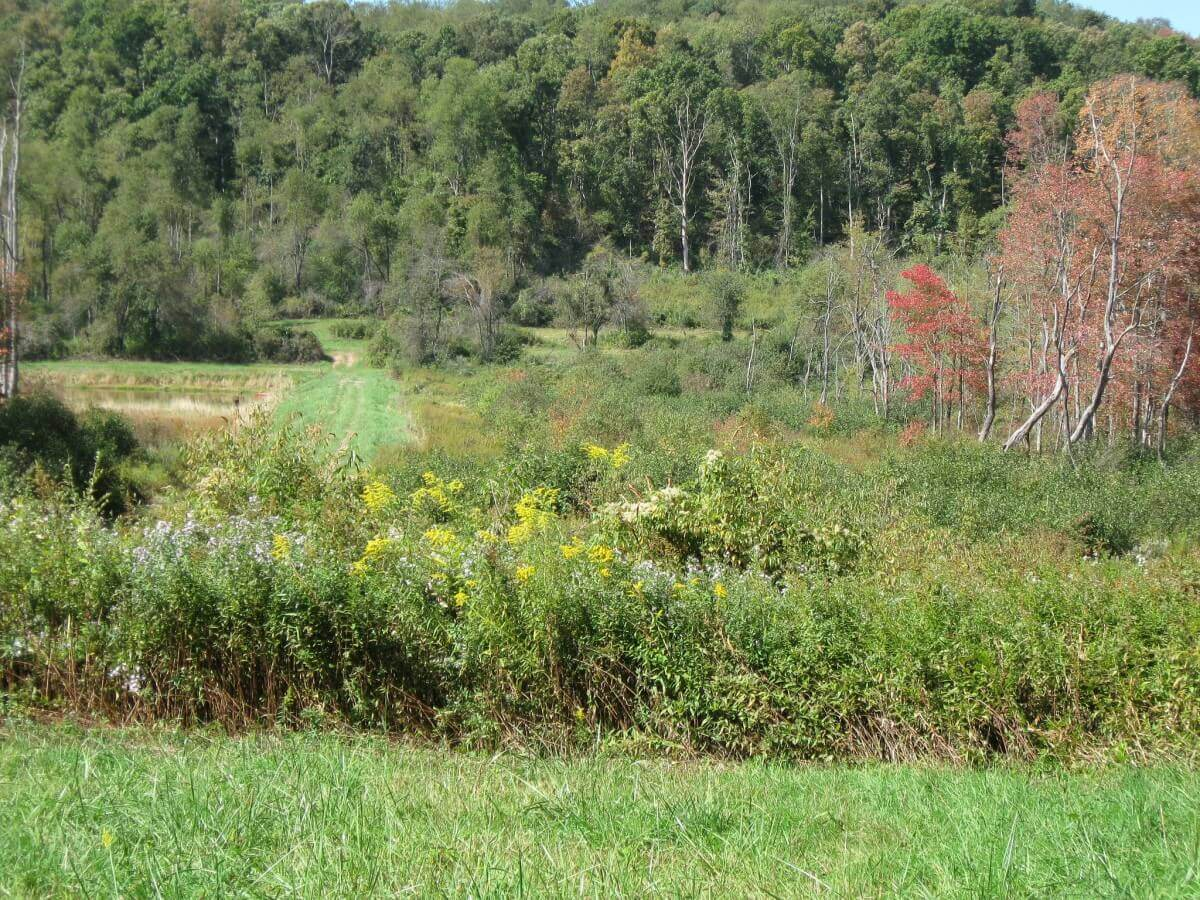 Pollinator Habitat to be Restored on BGE Rights-of-Way Located in Maryland State Parks