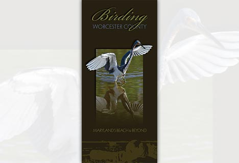 Worcester County Birding